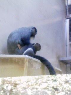 上野動物園に行った。