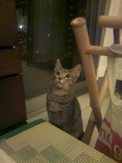 かわいい猫ちゃん画像です(≧∇≦)