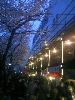 目黒川の桜、咲きにけり。