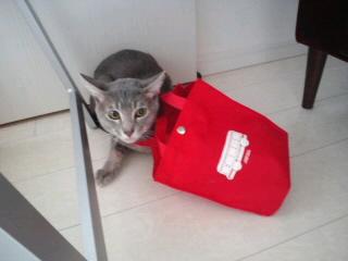 共有願望と猫のアドベンチャー