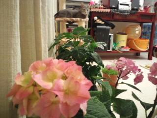 紫陽花と休日