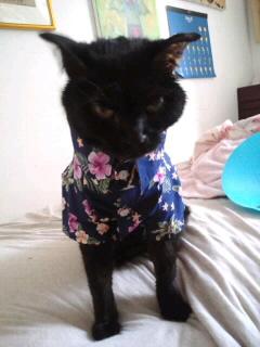 猫子にも衣装。