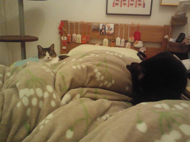 猫と妊婦はよく眠る