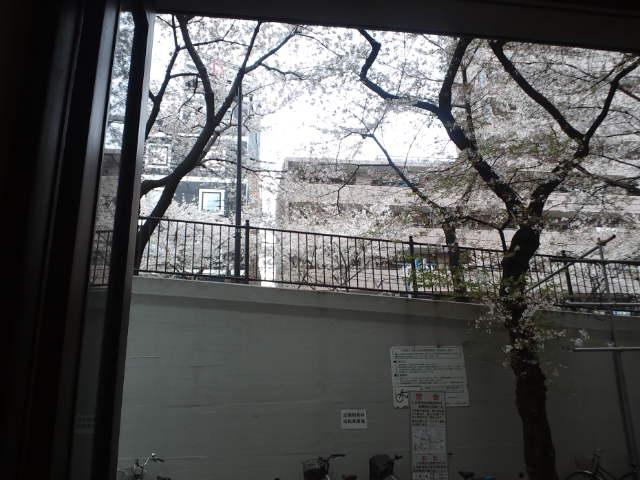 桜、レアンドロ